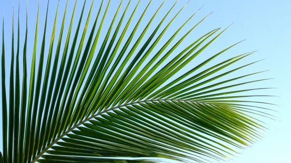 20.märts - palmipuudepüha